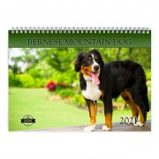 Bernese Mountain Dog 2021 Calendar